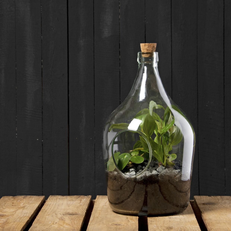 DIY Pflanzenterrarium 3 Liter